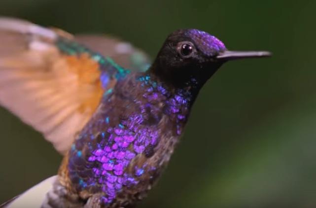 birding-colombia-tourismus-Wilfried-Ellmer-Consulting-Group%E2%84%A2%20-yook3%E2%84%A2
